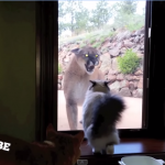 【驚愕】飼いネコと野生ネコ、ガラス越しの遭遇