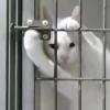 閉じ込められてもなんのその、巧みに脱出するネコ